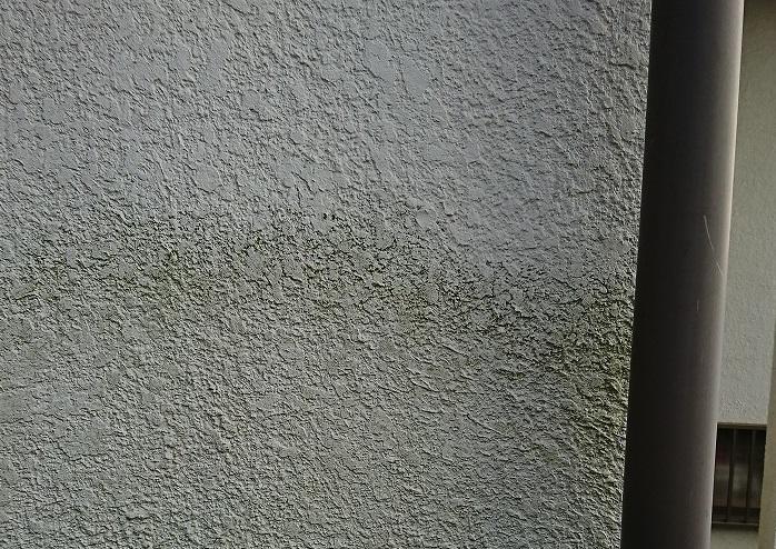 モルタル壁カビ2