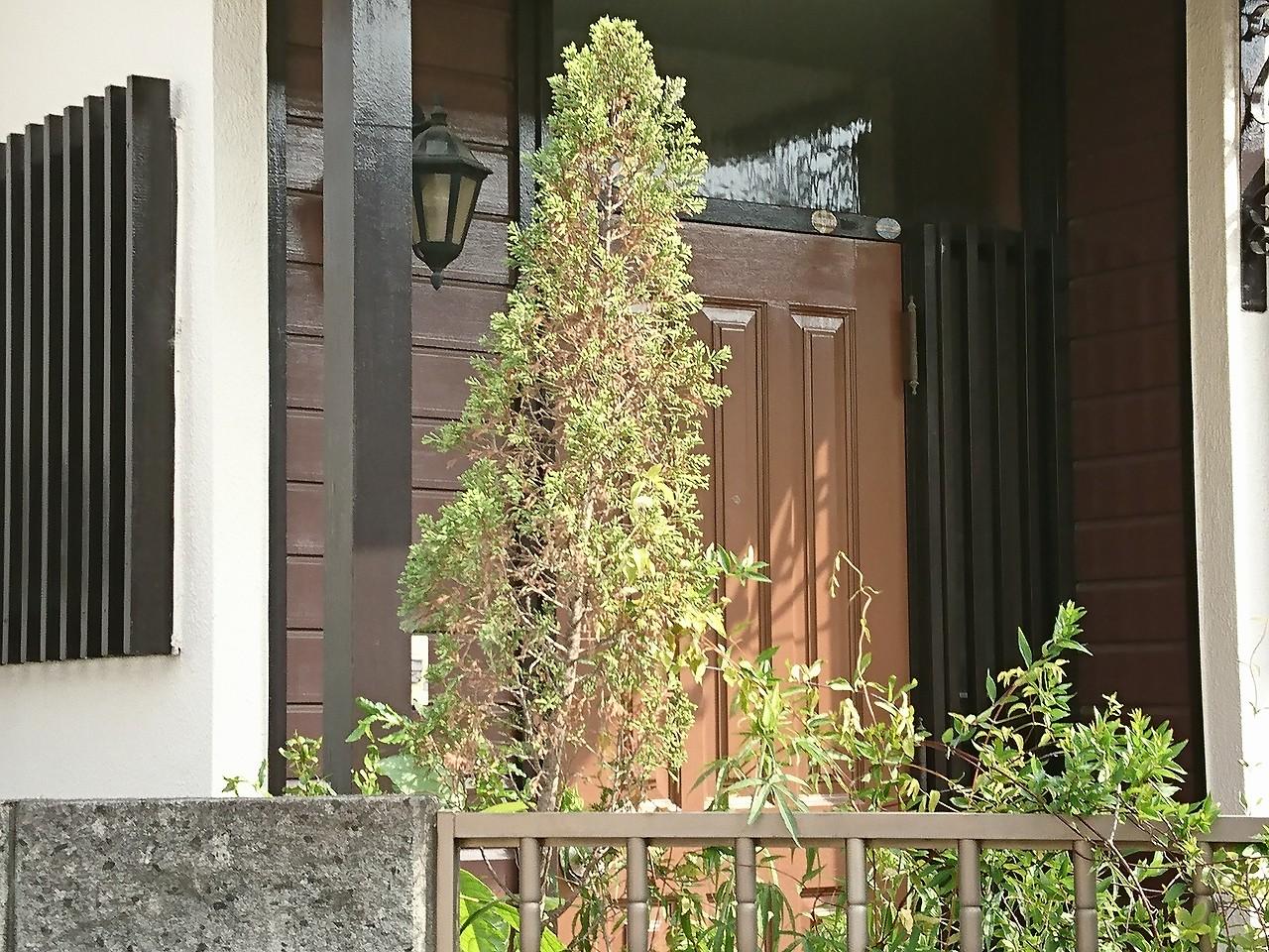 玄関に木質系を使った例
