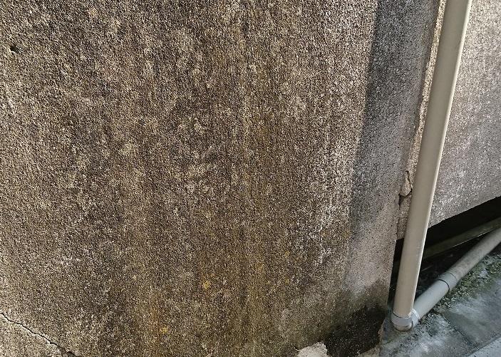 モルタル壁カビ1